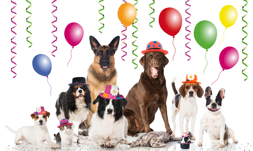 ... doggies.com and breeders.net wish you a wonderful and dog-filled 2015