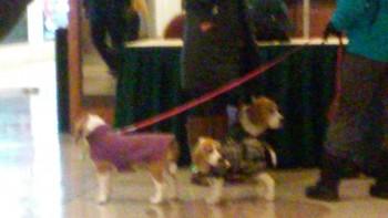 The Beagle Brigade!