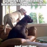 Friday Funny:  Guard Dogs