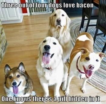 FF Bacon