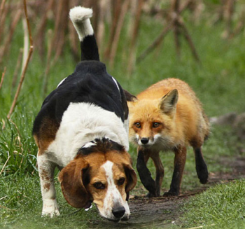 FF Worst Hunting Dog Ever