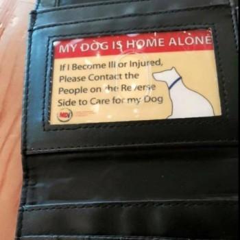 Pet-Emergency-Wallet-Card-1-600x600