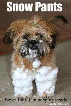 FF Snow Pants