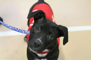 Photo:  American Pet Professionals