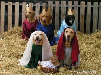 Xmas Dog Pic