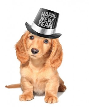 Happy new year's puppy.