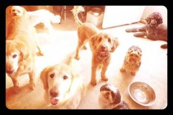 Alli Dog Vacay
