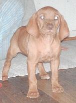 Cooper Baby