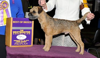 The Border Terrier, Meadowlake Dark Side of the Moon