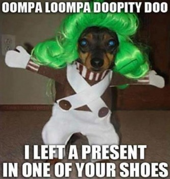 Oopmpa Loompa Dog