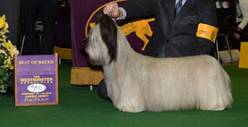 The Skye Terrier, Charlie