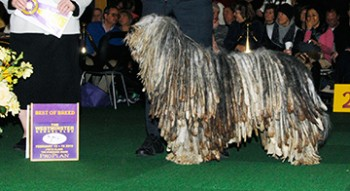 Viggo Artos Dell Albera (Bergamasco)