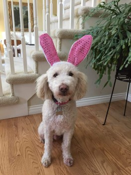 My cousin's Easter dog.