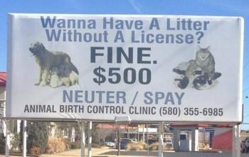 License Fine