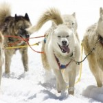 Iditarod 2016 Ceremonial Start