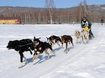 Limited North American Championship Sled Dog Races