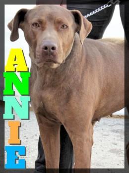 Annie MT
