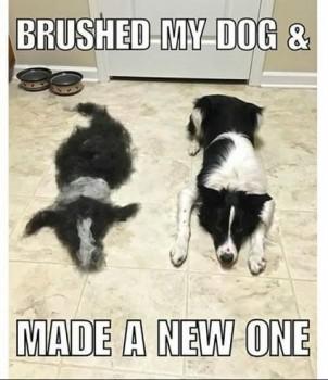 Shed Dog