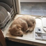 Friday Funny:  Too Tired to Help With The Dishes