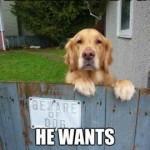 Friday Funny:  Beware of Dog