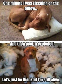 FF Pillow Explosion