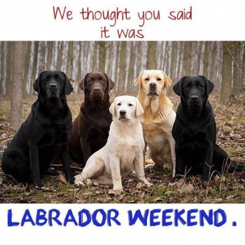 Labor Day Labs