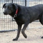 Shelter Sunday:  Safe Haven Rescue Kennel / Yerington, NV
