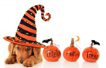 Cute puppy wearing a Halloween witch hat.