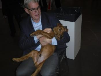 irish-terrier-1