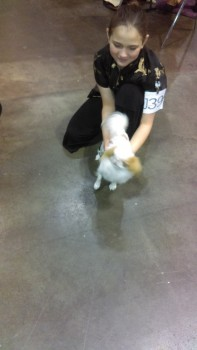 The Japanese Chin's picture is a little blurry, but you gotta love that the handler dressed the part!