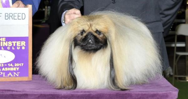 National Dog Show Breed Winner List