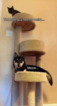 Dog in cat tree