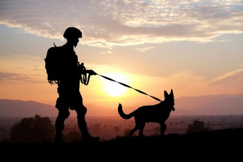 Silhouettes of soldier and dog on sunset background. Military se