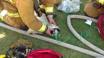 Bakersfield rescue