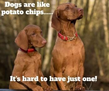 Viszla chips