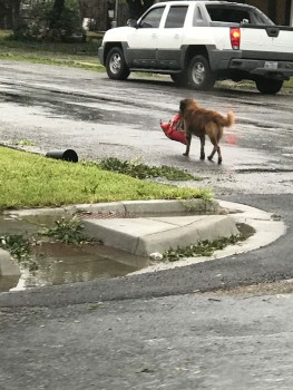 Hurricane dog