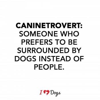 From iheartdogs.com