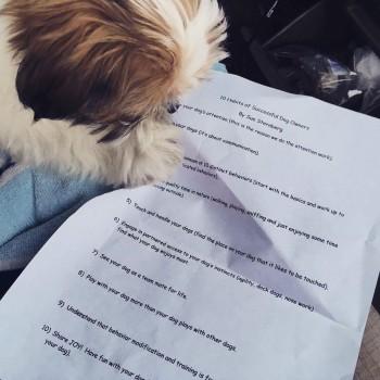 a talk essay quarrel