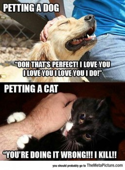 cat dog petting