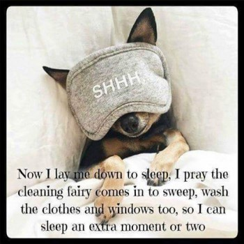 Cleaning fairy