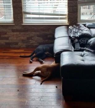 Mischief Mayhem Couch