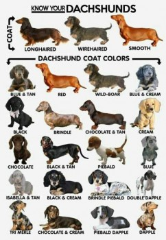 Doxie Guide