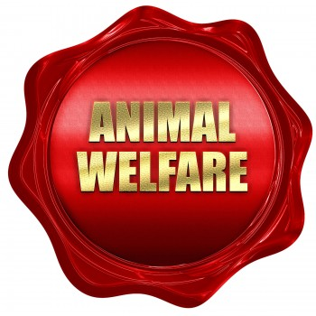 animal welfare, 3D rendering, red wax stamp with text