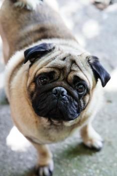 Emmitt Westminster Dog Show