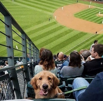 Stadium dog