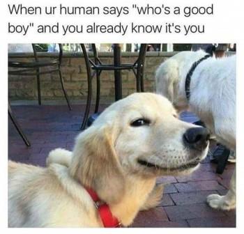 Good boy2