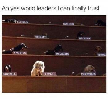 UN Dogs