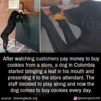 Buying cookies