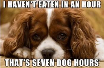 Dog Hours