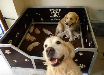 Golden selfie